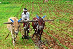 सुनसरीमा किसानलाई मजदुरको अभाव