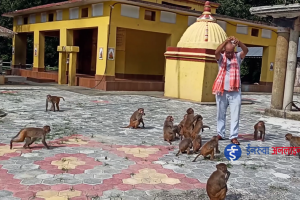 """सिङ्गारिदै आस्थाको केन्द्र """"रामधुनी"""" (भिडियो रिपोर्ट)"""